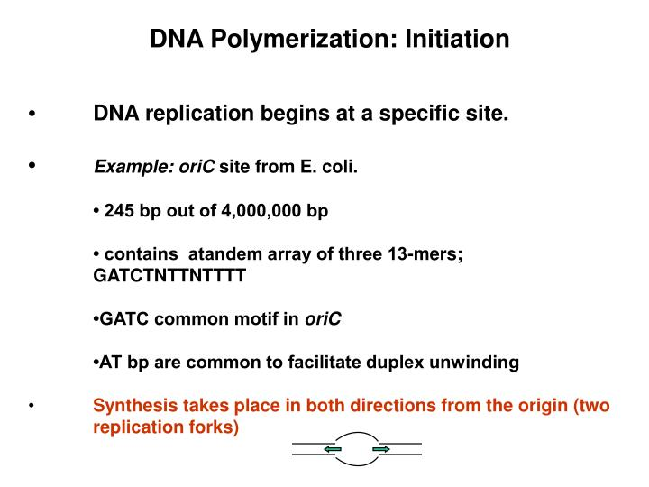 DNA Polymerization: Initiation