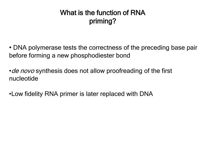 What is the function of RNA priming?