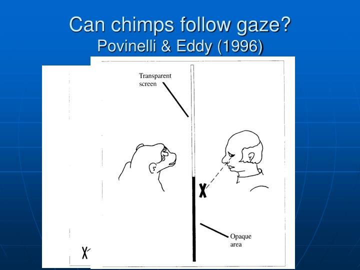 Can chimps follow gaze?