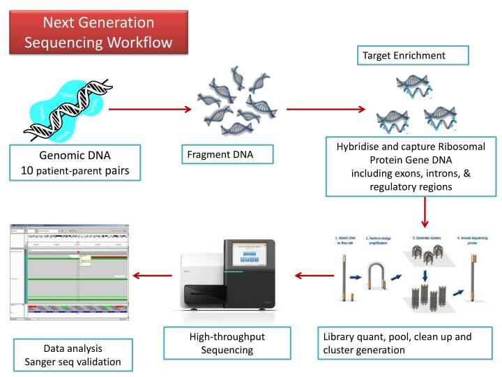 Next Generation Sequencing Workflow