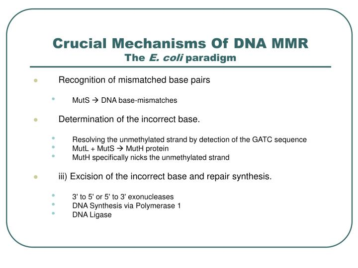 Crucial mechanisms of dna mmr the e coli paradigm