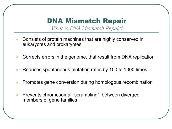 Dna mismatch repair what is dna mismatch repair