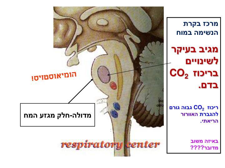 מרכז בקרת הנשימה במוח