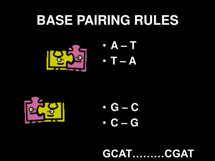 BASE PAIRING RULES