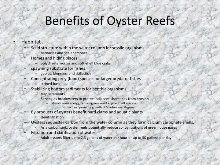 Benefits of Oyster Reefs