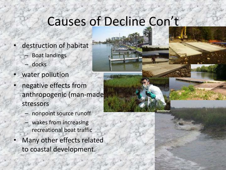 Causes of Decline Con't