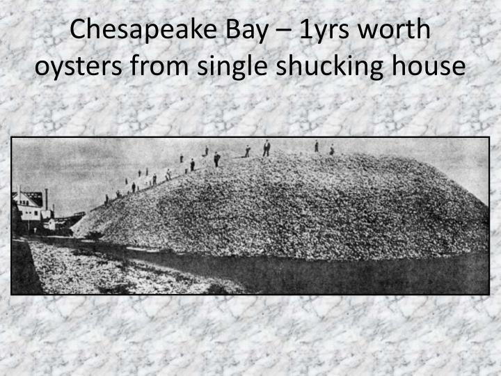 Chesapeake Bay – 1yrs worth oysters from single shucking house