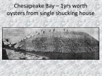 chesapeake bay 1yrs worth oysters from single shucking house