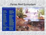 oyster reef ecosystem