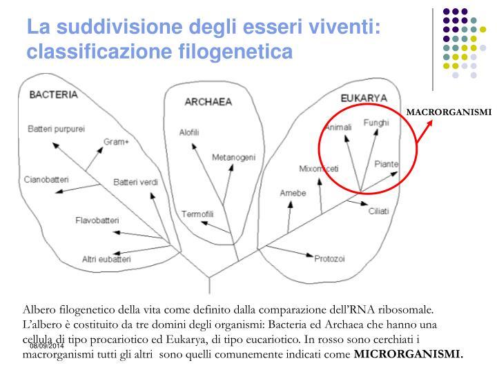 La suddivisione degli esseri viventi: classificazione filogenetica