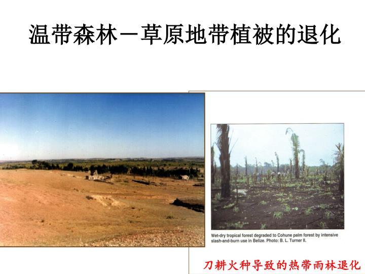 温带森林-草原地带植被的退化