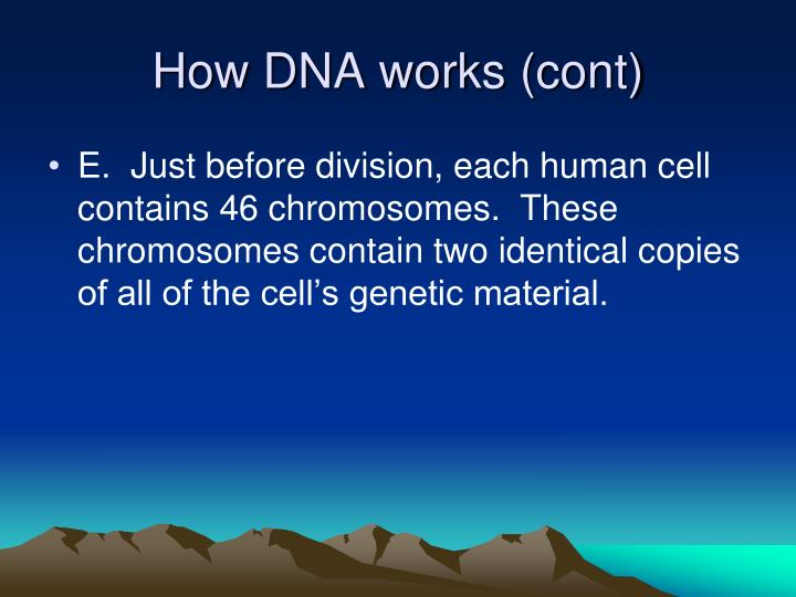 How DNA works (cont)