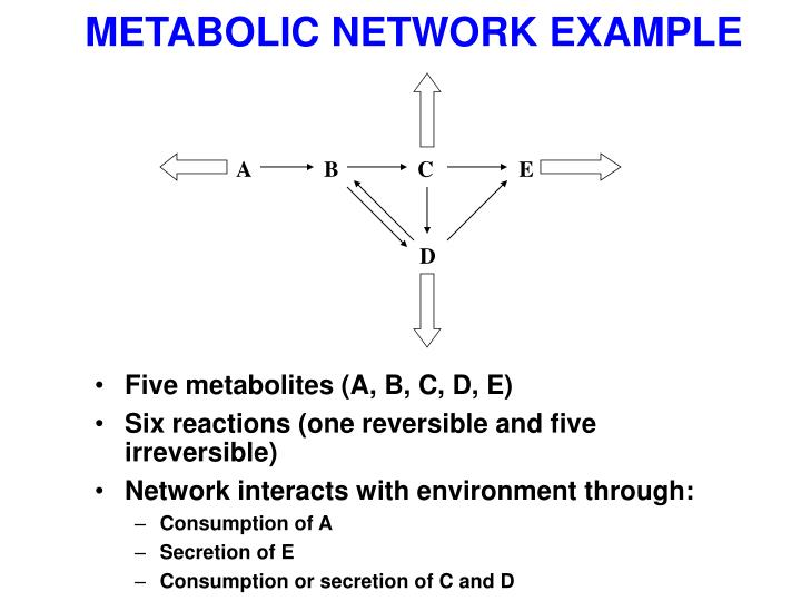 METABOLIC NETWORK EXAMPLE