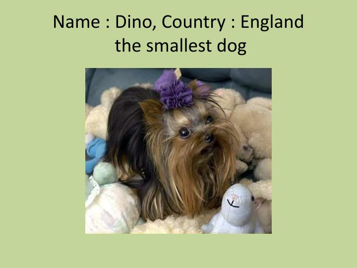 Name : Dino, Country : England