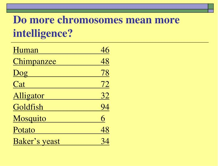 Do more chromosomes mean more intelligence?