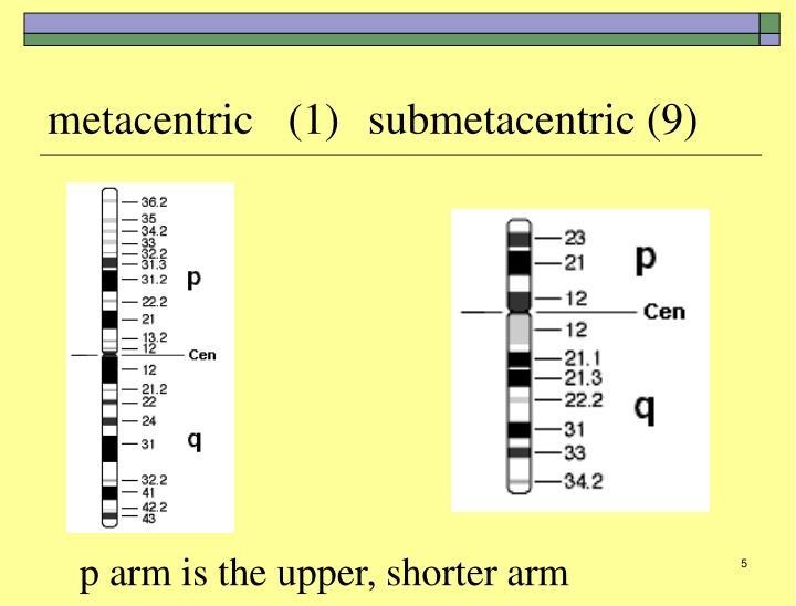 metacentric(1)submetacentric (9)