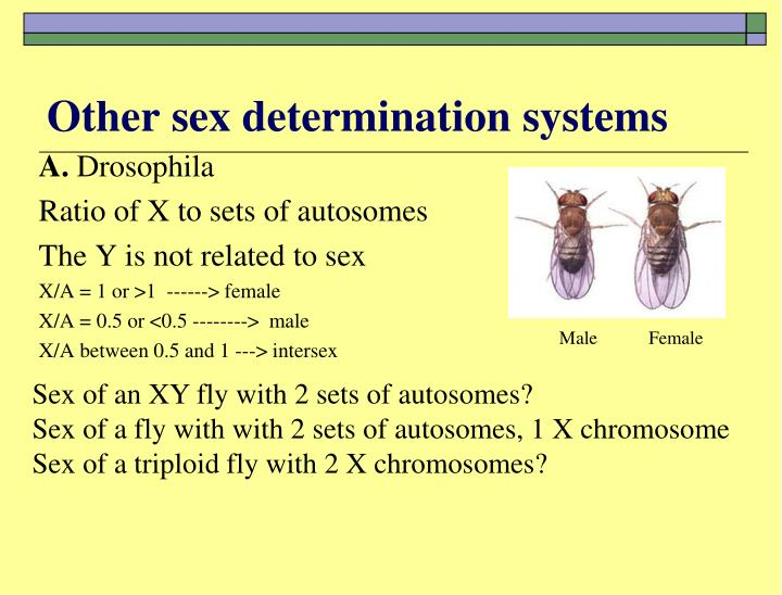 Other sex determination systems