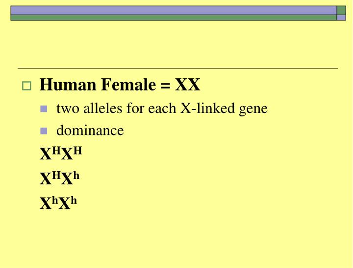 Human Female = XX