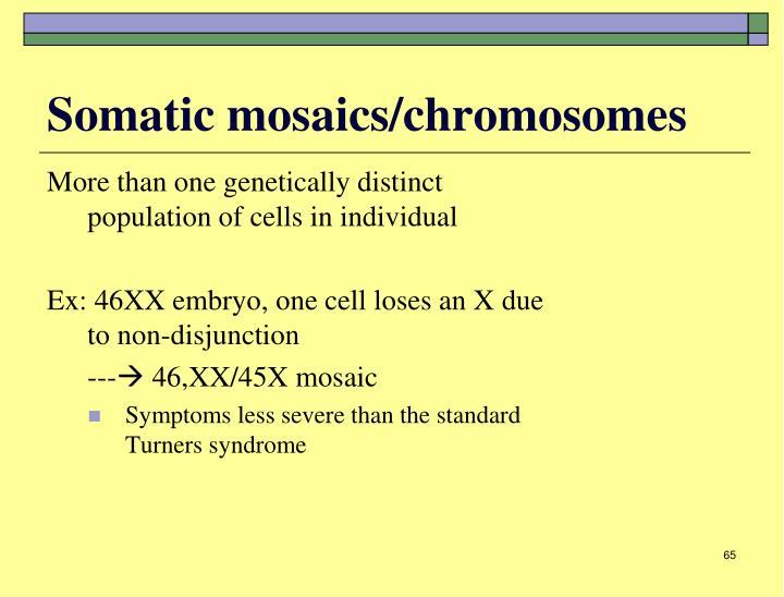 Somatic mosaics/chromosomes