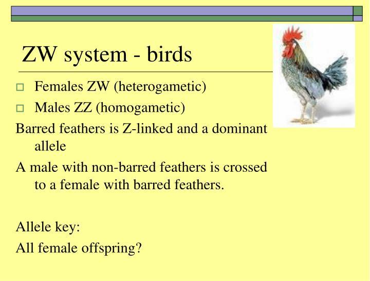 ZW system - birds
