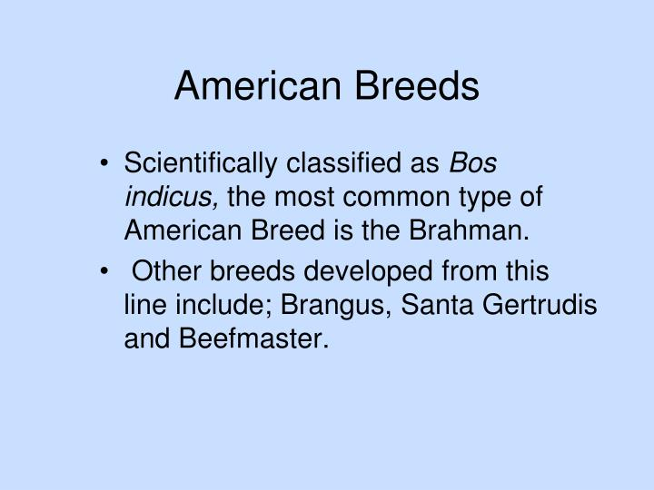 American Breeds