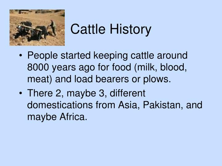 Cattle history