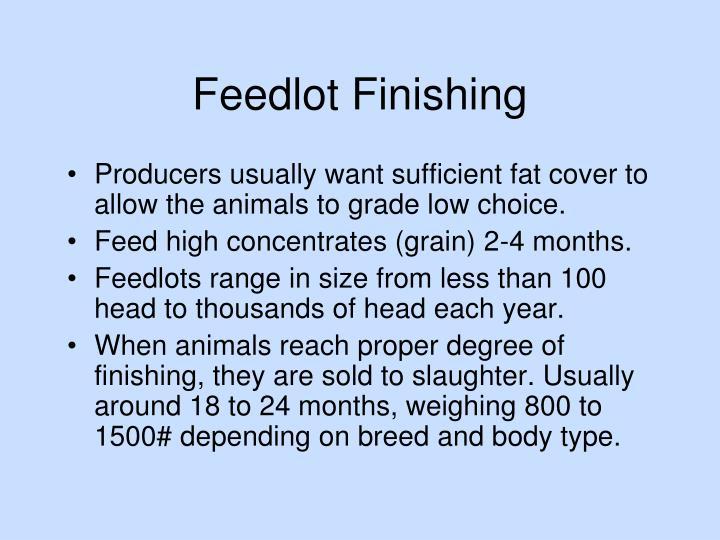 Feedlot Finishing