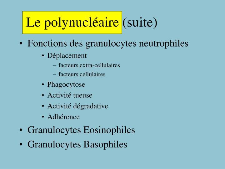 Le polynucléaire (suite)
