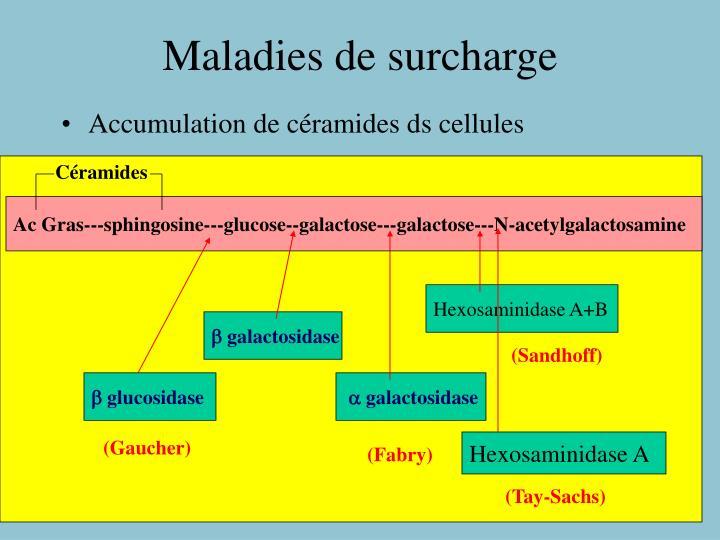 Céramides