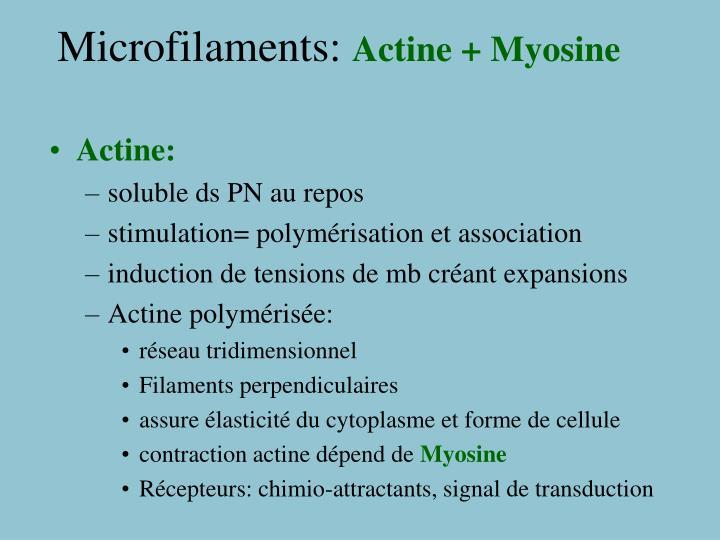 Microfilaments: