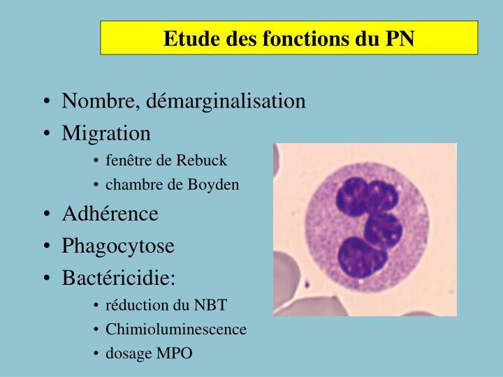 Etude des fonctions du PN