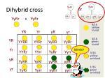 dihybrid cross2
