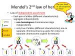 mendel s 2 nd law of heredity