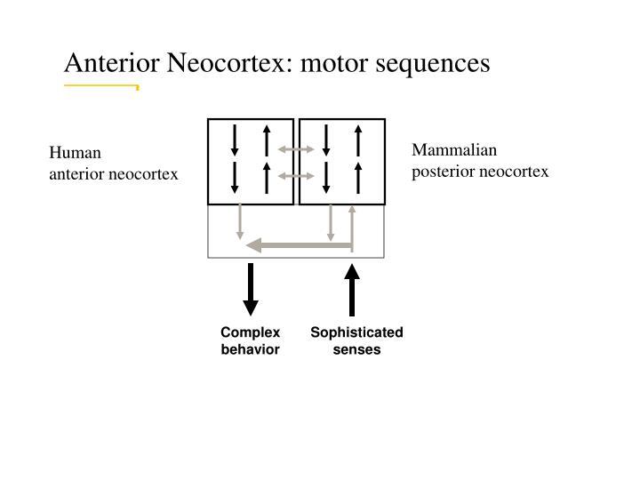 Anterior Neocortex: motor sequences
