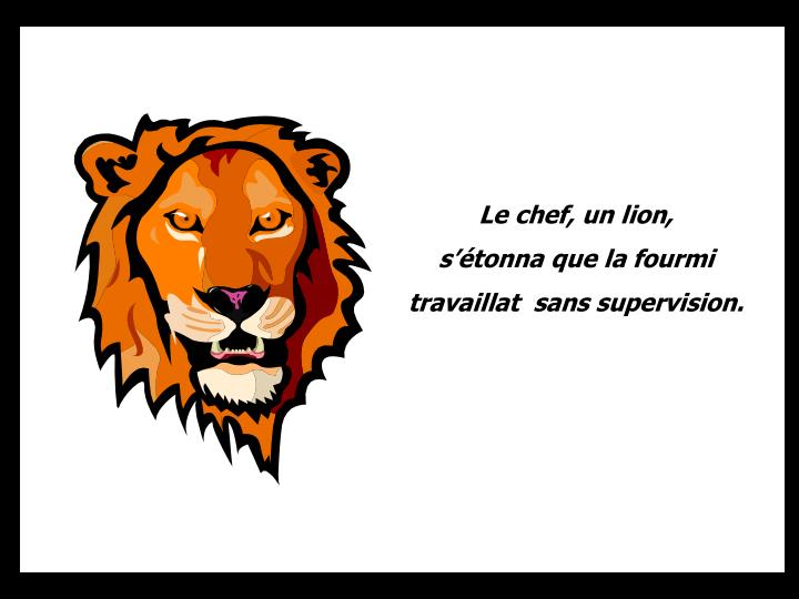 Le chef, un lion,