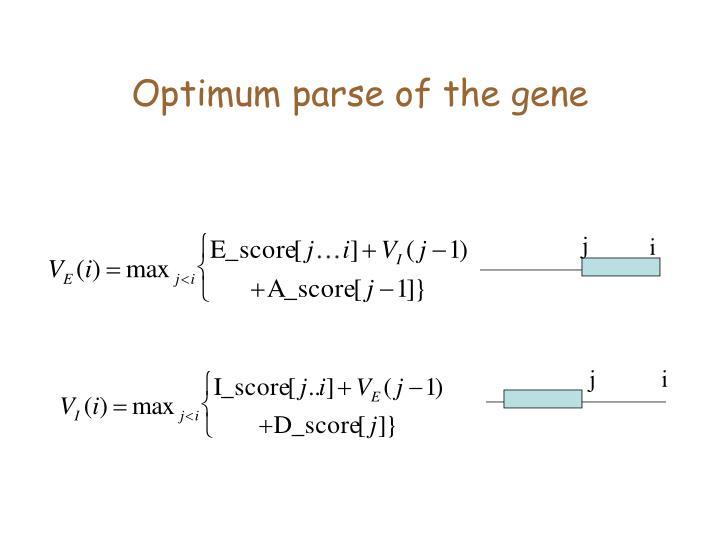 Optimum parse of the gene