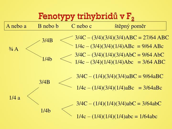 Fenotypy