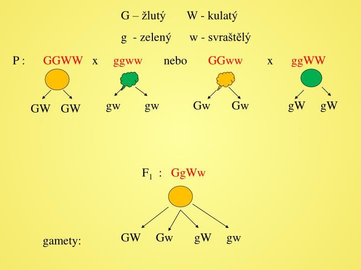 G – žlutý       W - kulatý