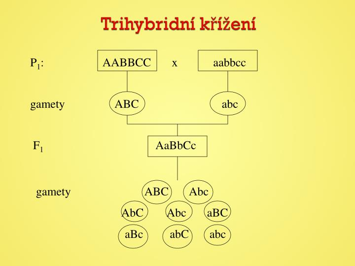 Trihybridní
