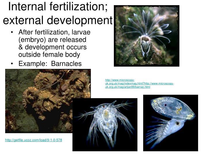 Internal fertilization; external development