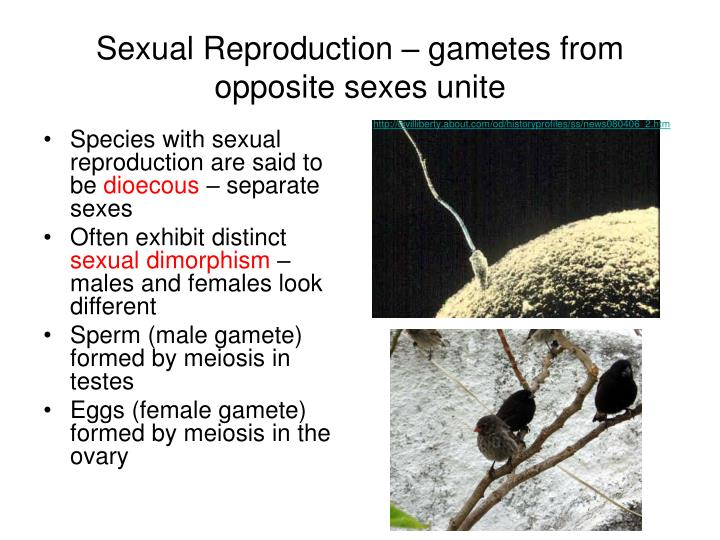 Sexual Reproduction – gametes from opposite sexes unite