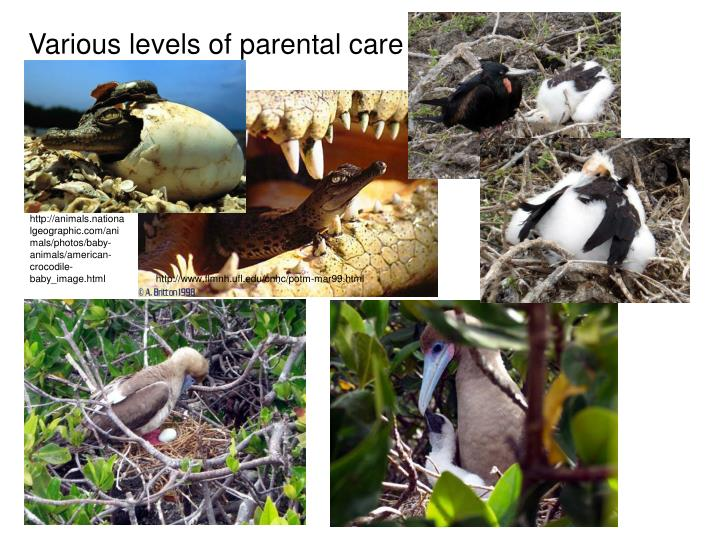 Various levels of parental care