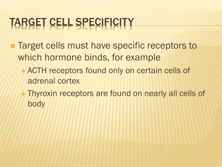 Target cells must have specific receptors to which hormone binds, for example