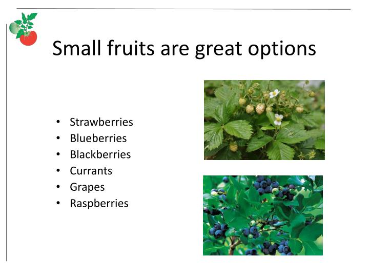 Small fruits are great options