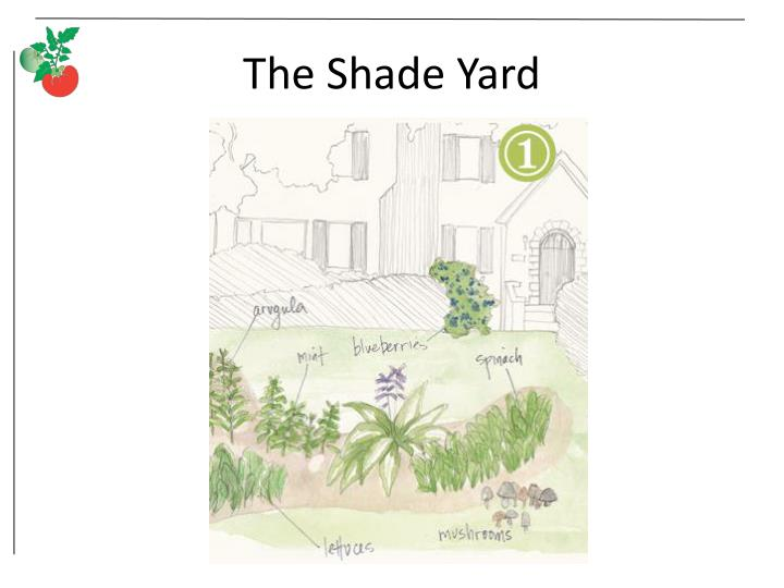 The Shade Yard