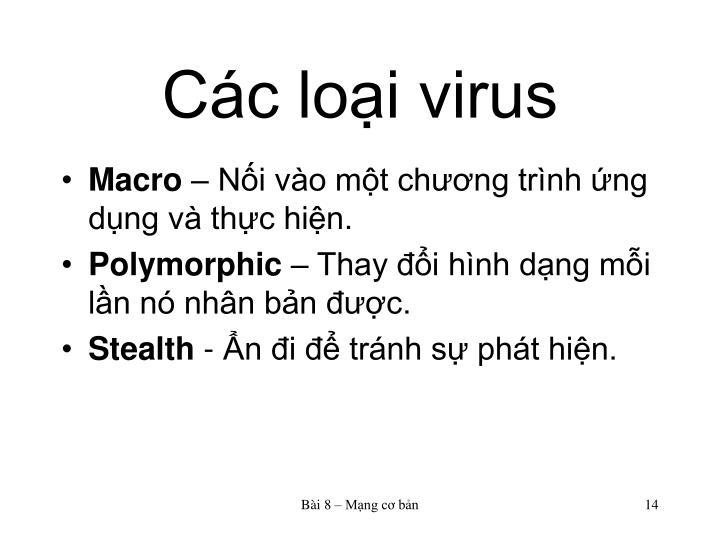 Các loại virus