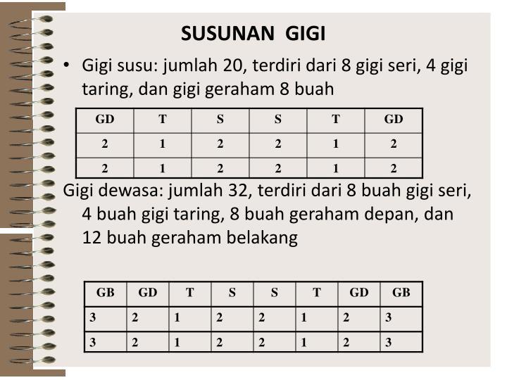 SUSUNAN