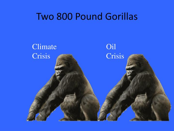 Two 800 Pound Gorillas