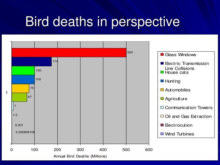 Bird deaths in perspective