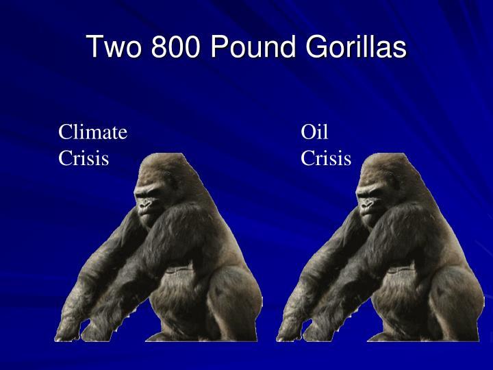 Two 800 Pound Gorillas